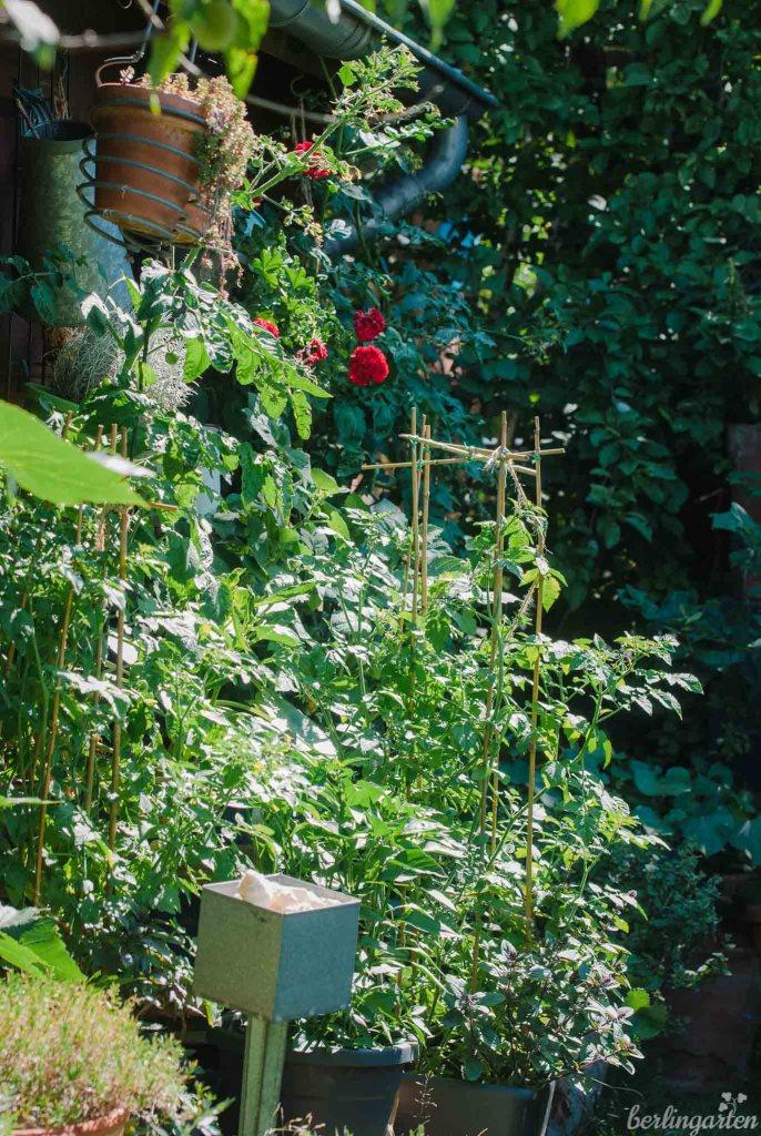 Meine Kübelpflanzen
