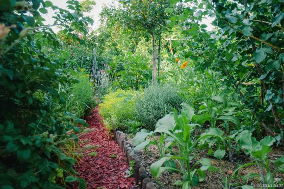 Stachelbeeren, Rosmarin, Majoran, Flower Sprouts, Kohlrabi, Tagetes, Ringelblume