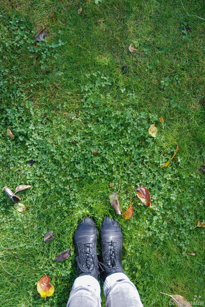 Mehr Klee als Rasen