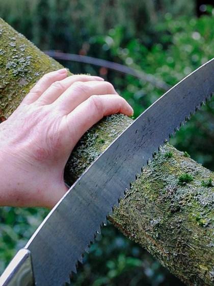 Gutes Werkzeug wie diese Säge ist für den Baumschnitt unerlässlich