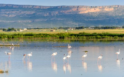 The flamingoes and poppies of Albacete, Spain