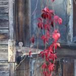 photo of red leaves in front of garage door