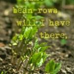 nine bean rows, poem by w.b. yeats, lake isle of innisfree, photo of bean seedlings