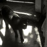 black cat in shadows