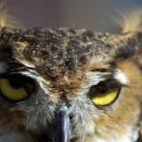 Owl Eyes, 2010