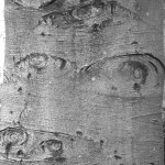 gray tree trunk with eyes