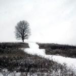 photo of tree in winter field