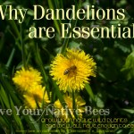 dandelion with honey bee