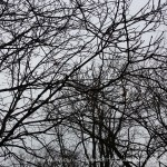 tree branches against gray sky