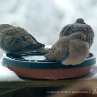 It's A Bird Bath, Not...
