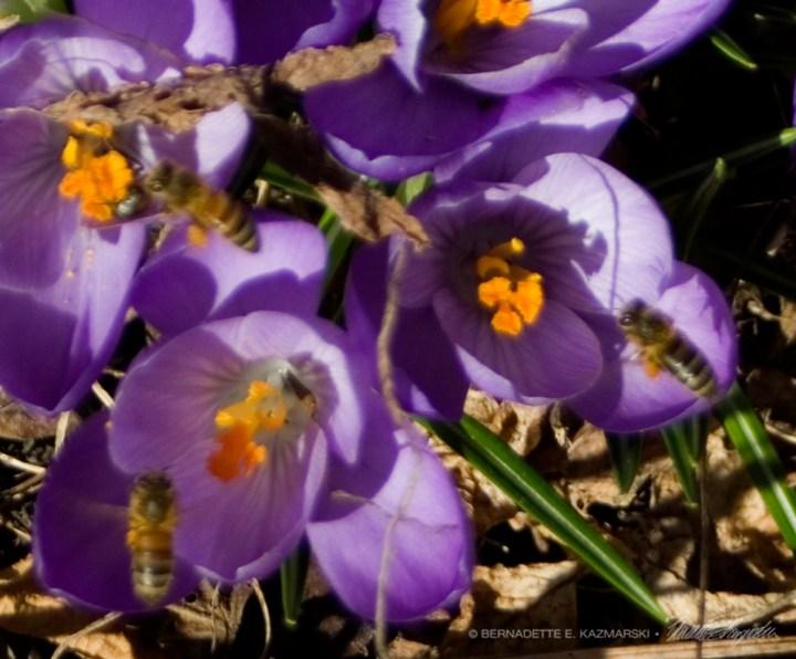 Three honeybees.
