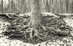 013114-FindYourRoots-1000px