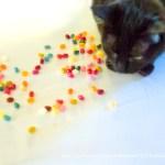 Easter Celebration for Jelly Bean