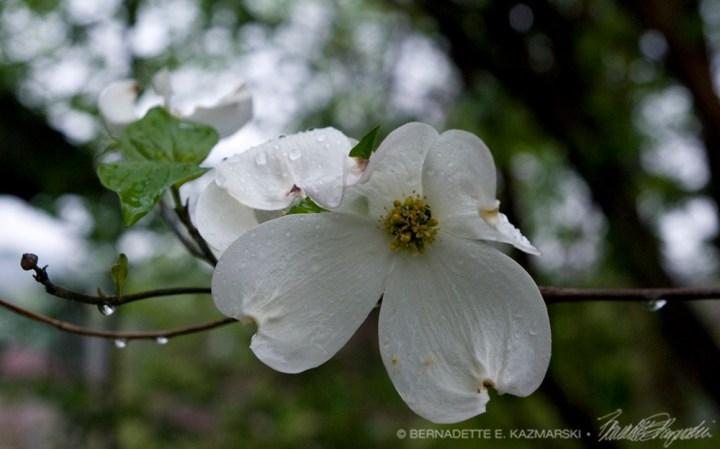 The single blossom.