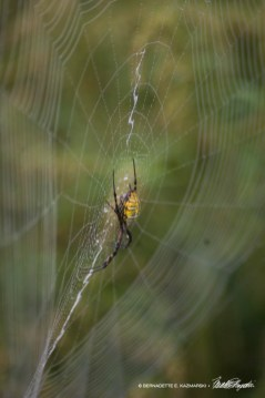 Big Yellow Spider