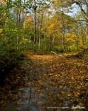 Leaf-covered stream
