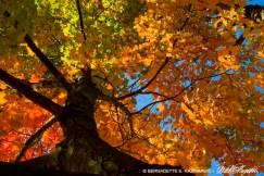 Autumn Rainbow