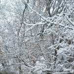 The First Real Snow