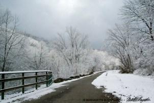 Trail 08