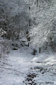 Trail 24