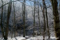 Trail 35