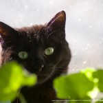 black cat and green leaves