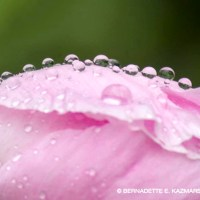 Rainy Joy