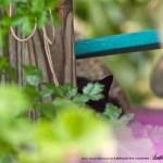 black cat on rocker