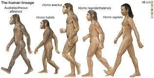 İlk insan türleri