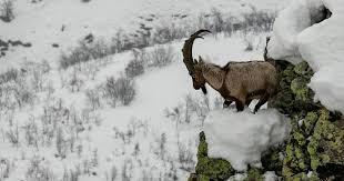 SARKİS SEROPYAN / Efsanelerin harman yeri, dağlar ülkesi Dersim