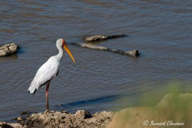 Bain de pieds dans la Mara