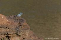 En contemplation de la rivière Mara