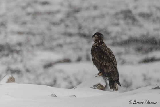 La sentinelle stoïque sous la neige...