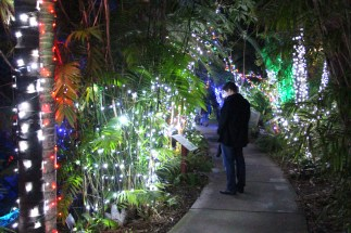Garden of Lights - Reading the Signs