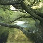 Washpools, Pwll Bo, Natural Swimming, River Irfon, Picnic spot