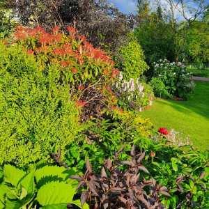 the garden at Cerdyn Villa