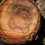 Services Offered By Tree Surgeons