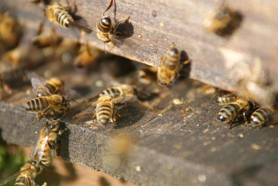 bees at home