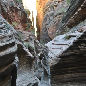Obersation Point Trail, Zion NP, Utah, USA