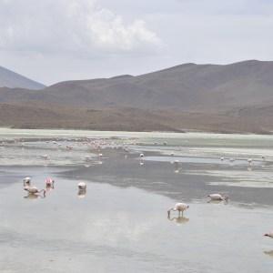 Laguna Hedionda, Sud Lipez, Bolivie