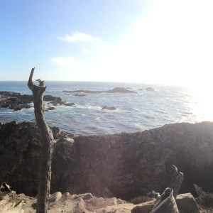 Point Lobos NR, Highway 1, Californie, USA