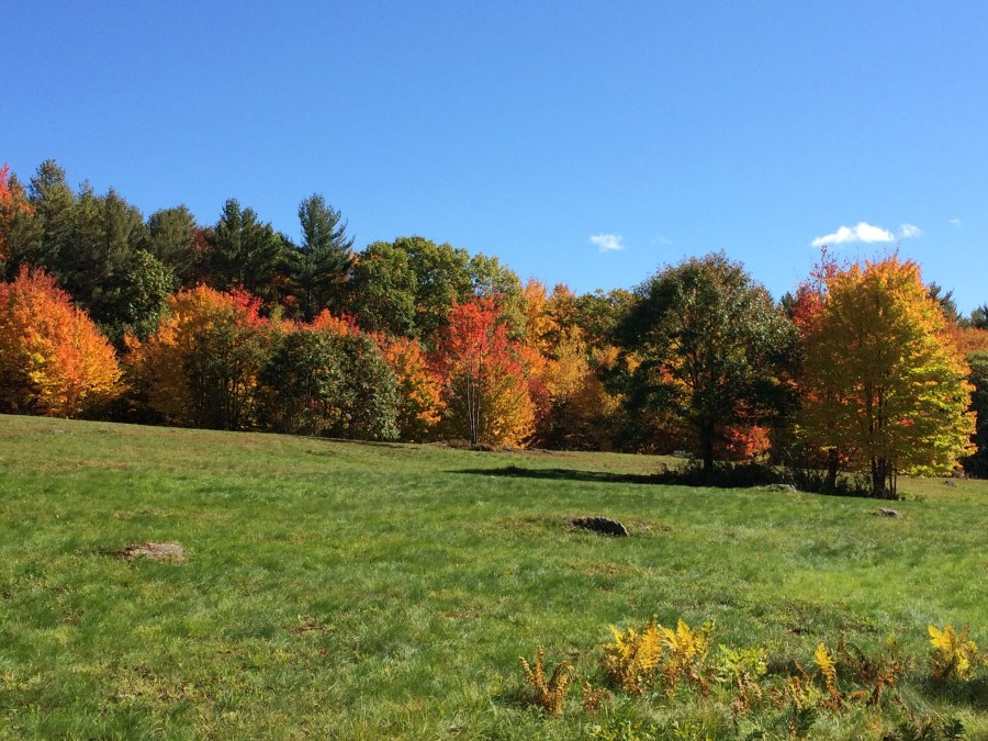 Fall colors display in the far pasture field.