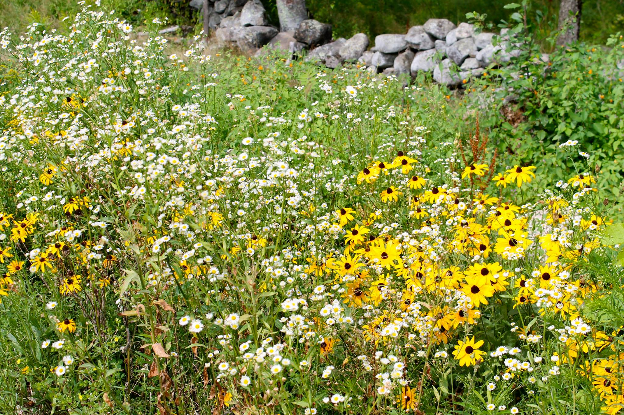 Wild flowers naturally decorate the fields in spring.