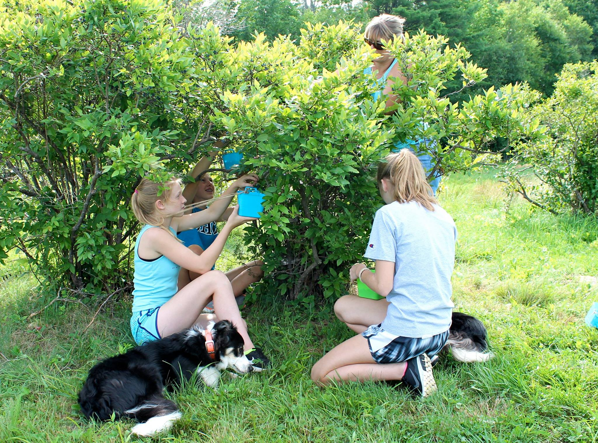 Kids love picking blueberries, no matter what their age.