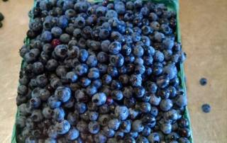 Taylor Brown Blueberries