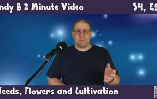 Andy B 2 Minute Video, Weeds, Flowers and Cultivation, S4, E5