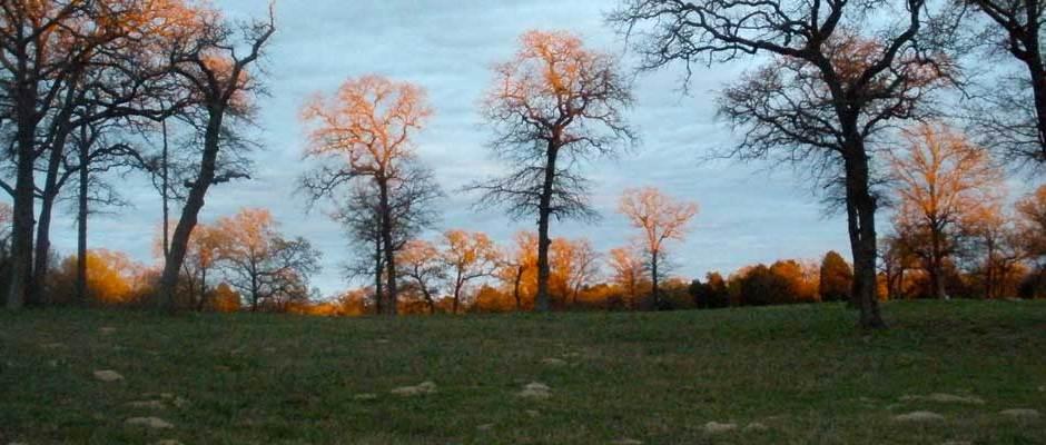 Sundown - Berry Hill Farm Pasture