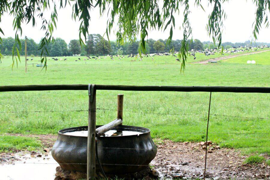 Underberg The Olde Duck | www.berrysweetlife.com