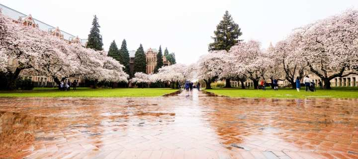 2018-03-23 UW Cherry Blossoms 11-33-09