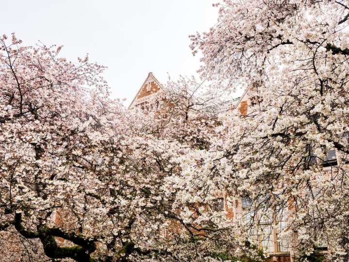 2018-03-23 UW Cherry Blossoms 11-38-54